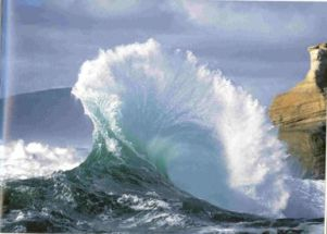 sheila piasecki wave
